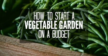 Frugal Gardening How To Start A Vegetable Garden On A