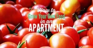 how to grow your own food in an apartment