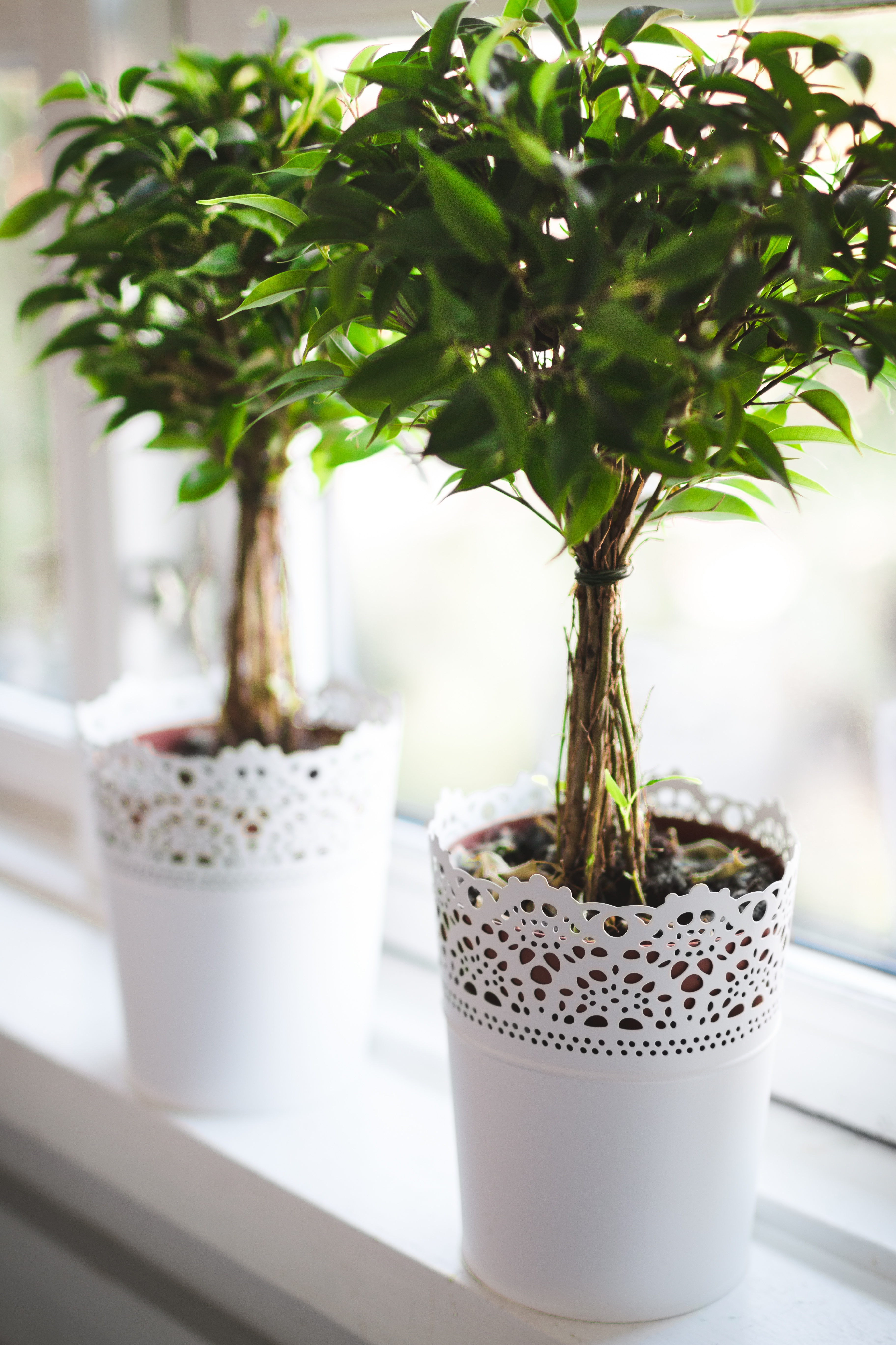 Thrifty ideas for cosy decoration includes indoor plants